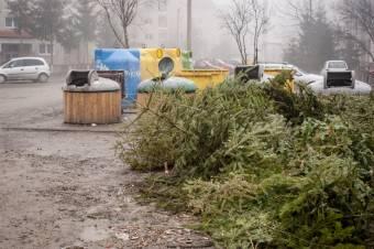 Begyűjtik a hulladéktárolóba került karácsonyfákat