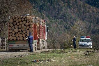 Több mint 1300 köbméter lopott fát találtak a rendőrök egy nagyszabású ellenőrző akció során