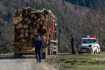 Országszerte ellenőrzéseket tartott a rendőrség az illegális fakitermelés visszaszorítása érdekében