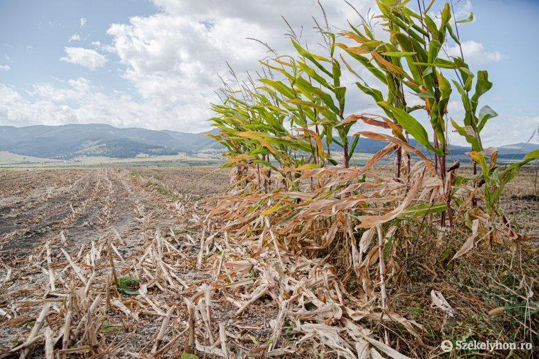 Idén is lesz lehetőség mezőgazdasági biztosításra pályázni