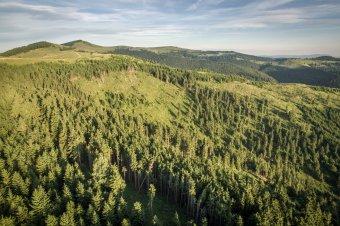 Másodjára is visszaperelték a román államtól erdővagyonuk egy részét Kemény János báró örökösei