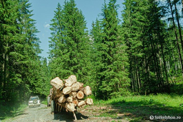 Exporttiltás helyett ellenőrzött erdőgazdálkodás: az érintettek nem értenek egyet a farönk és a fűrészáru kivitelének tiltásával