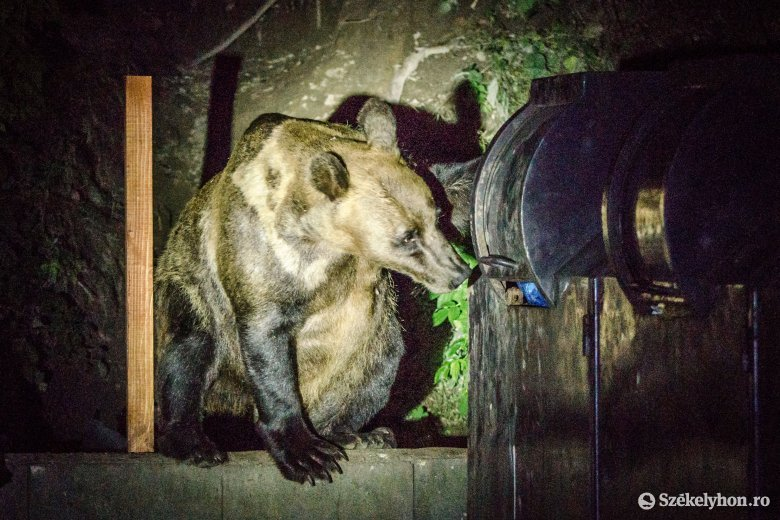 Rendkívüli tanácskozásra ült össze a medvetámadások miatt a különleges sürgősségi helyzetekkel foglalkozó bizottság