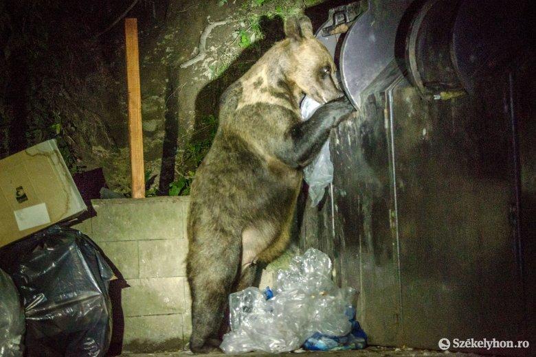 Nincs idő az elemezgetésre, azonnali cselekvésre van szükség a medvék ügyében Tánczos Barna miniszter szerint