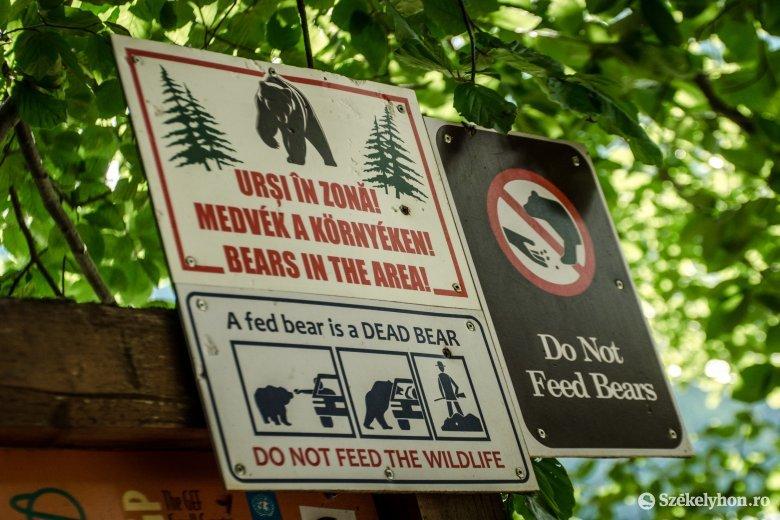 140 medve kilövését engedélyezte a környezetvédelmi miniszter