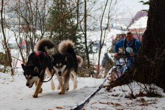 Kutyafogathajtás: ember és állat együttműködése