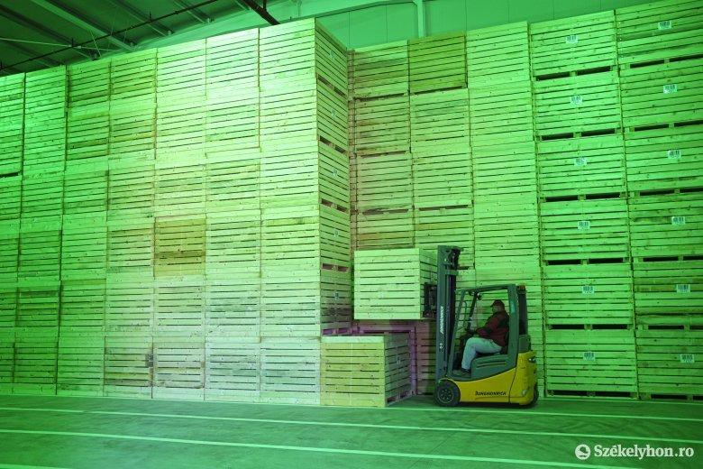 A tervek szerint hamarosan elkezdik a burgonyaszirom gyártását Csíkszentsimonban