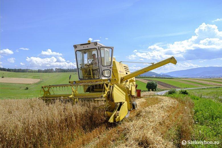 Több mint 11 millió tonna búza termett idén Romániában, ami közel kétszerese a tavalyi hozamnak