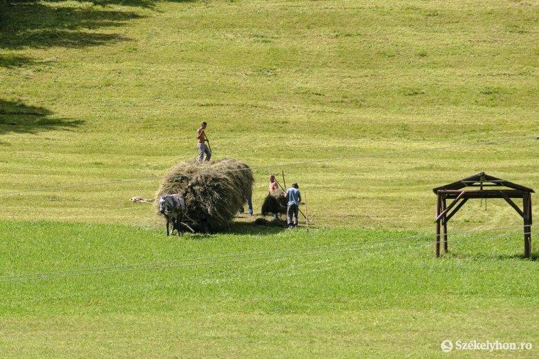 """Feláldoznák az uniós mezőgazdaságot a """"zöldítésért"""" – 2023-ban lép életbe az EU új agrárpolitikája"""