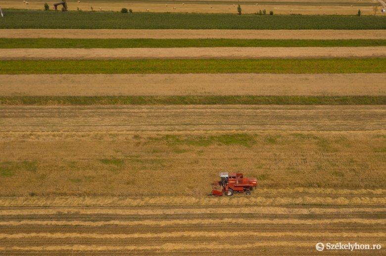 A tavaszi kilátások ellenére jó az idei termésátlag Hargita megyében