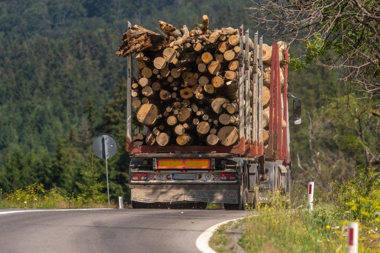 Több mint 1000 bűnügyi eljárás indult idén illegális fakitermelés miatt