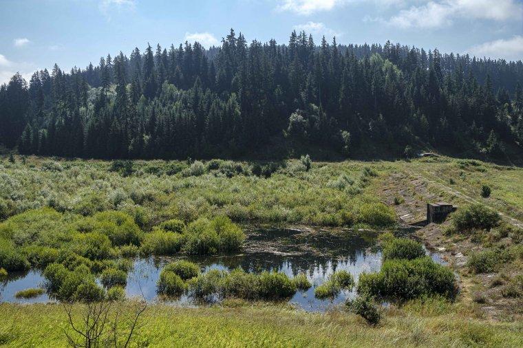 Ismét tó lesz az évek óta terebélyesedő bozótos helyén