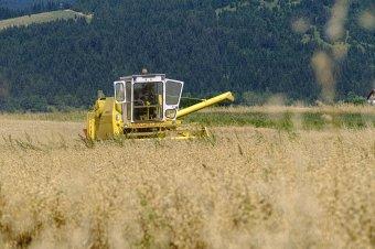 Zabhegyező agrárpolitika: rendszerszintű reform kell, hogy előtérbe kerüljön a hazai termék