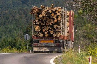 Belevágtak: több száz erdészeti bűntett ügyében indult nyomozás, több százezer lejre bírságoltak egy hét alatt