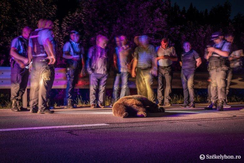 Medvét gázoltak el Csíkszereda közelében