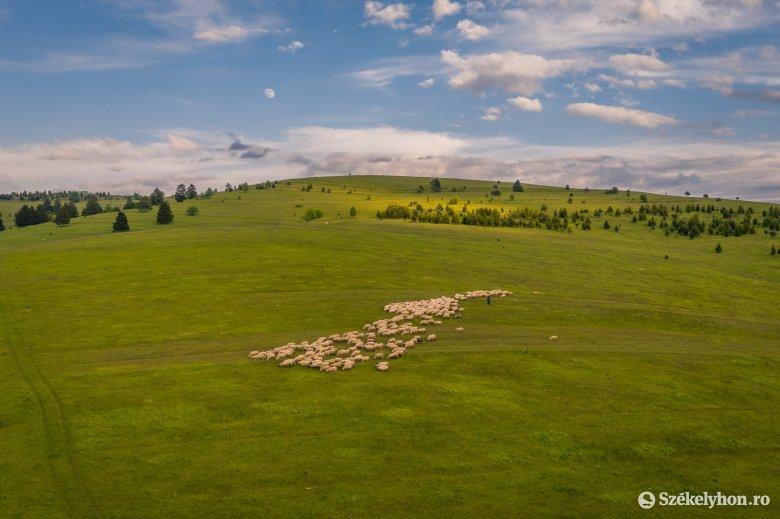 A jó pásztorokért imádkoznak