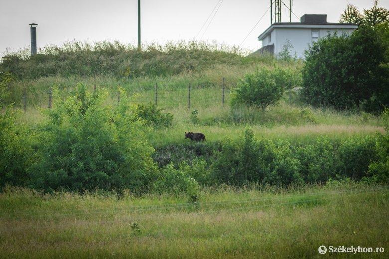 Medvejárás Tusnádfürdőn, Marosfőn és Csobotfalván