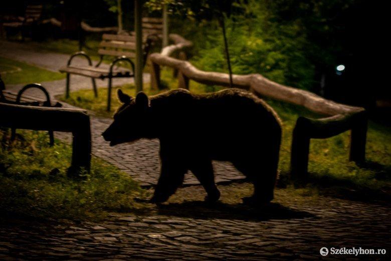 Mennyi medve van hat év semmittevés után?