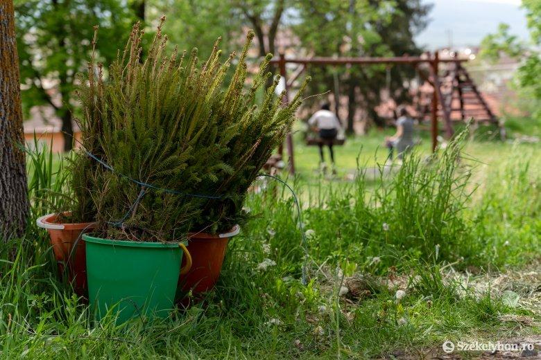 Önkéntes csemeteültetés a csíkszeredai ifjúsági parkban