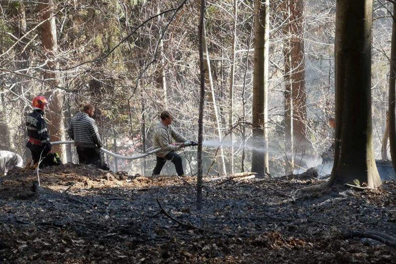Az erdőt veszélyeztette az avartűz