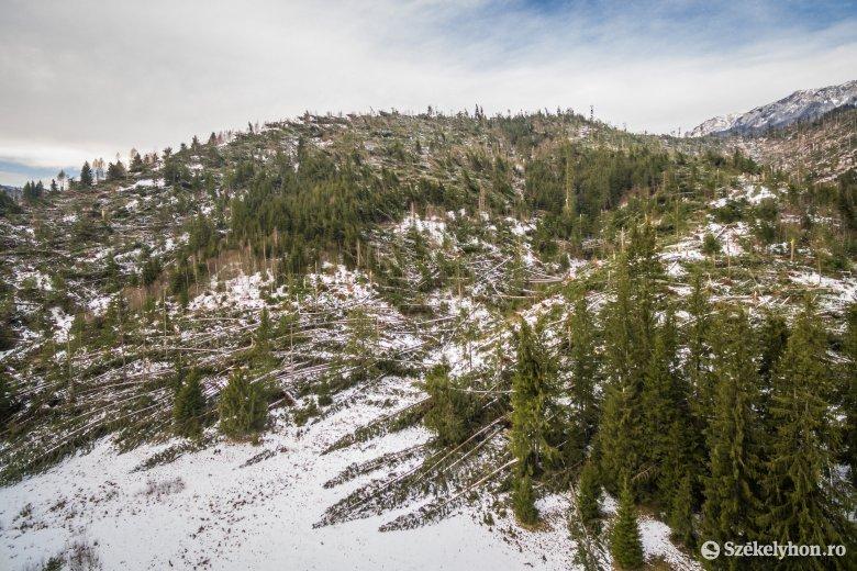Megkezdődött a széldöntött fák kitermelése, a becsültnél nagyobbak a károk
