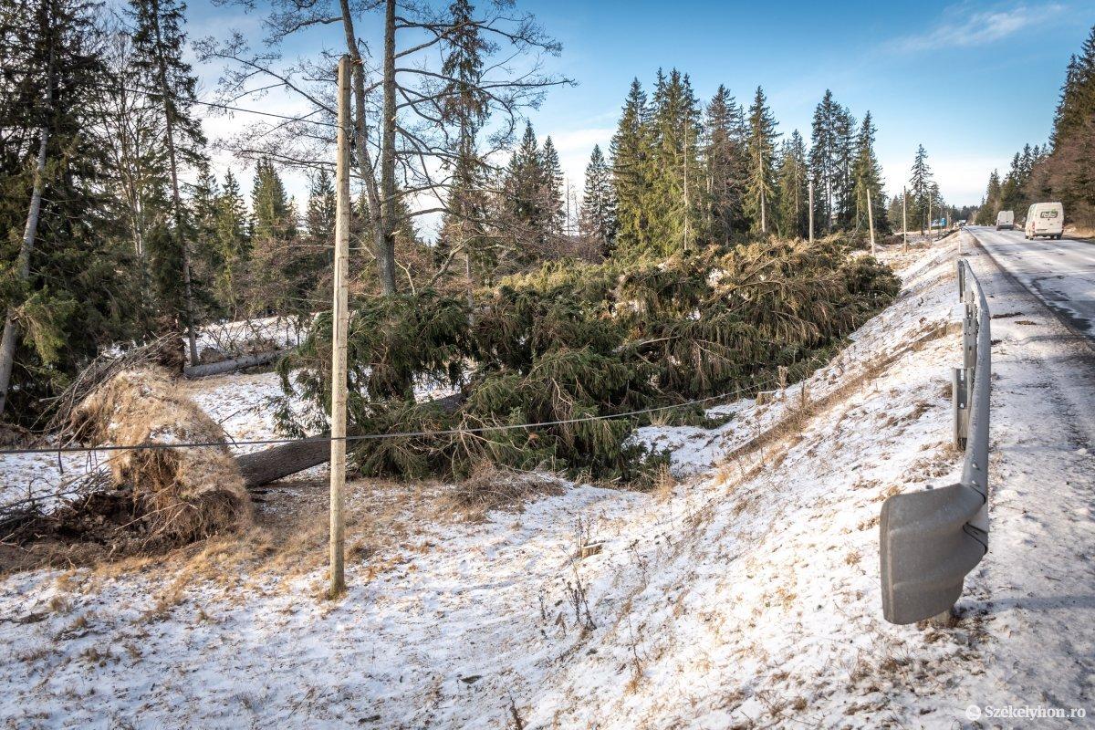 https://media.szekelyhon.ro/pictures/csik/aktualis/2020/11_februar/o_szelvihar-utan-13a-orszagut-pnt-4.jpg