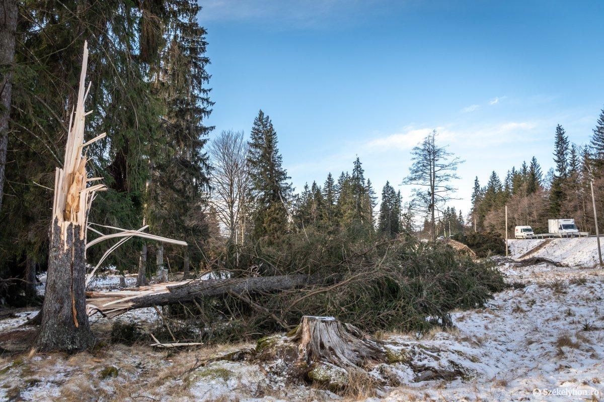 https://media.szekelyhon.ro/pictures/csik/aktualis/2020/11_februar/o_szelvihar-utan-13a-orszagut-pnt.jpg