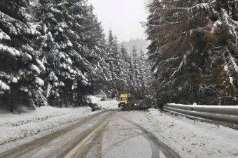 Kidőlt fák miatt rekedt a Radnai-havasokban két turista