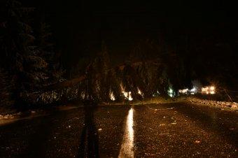 Több Hargita megyei utat is lezártak a kidőlt fák miatt  – frissítve