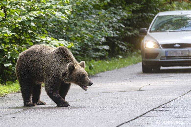 """Egyhangúlag elfogadták a szenátusi szakbizottságok a """"medverendeletet"""""""