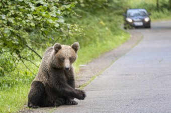 Turisták futottak össze a medvével