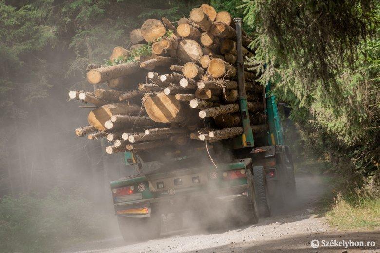 Fanyomkövetés, erdei brutalitás: civil szervezeteket is bevonnak a minisztérium új munkacsoportjába