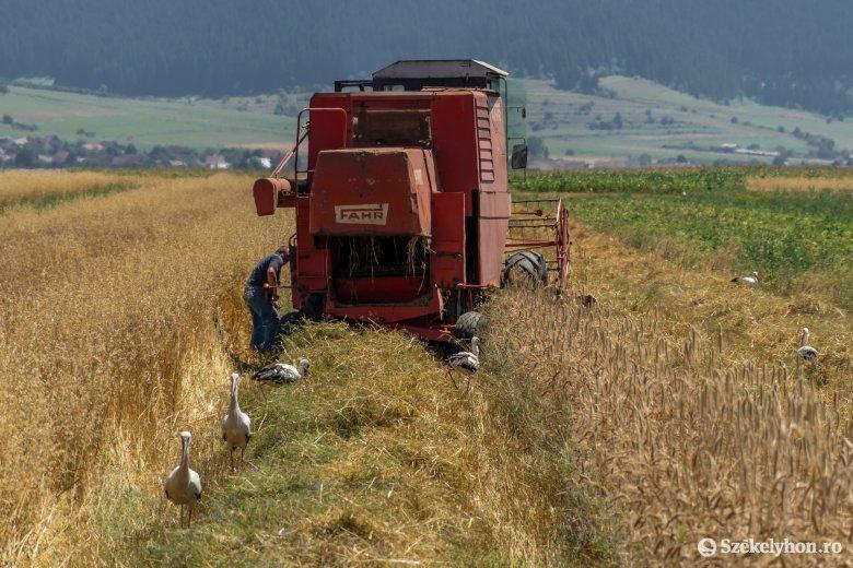 230 millió eurónyi mezőgazdasági támogatás áll a pályázó gazdák rendelkezésére