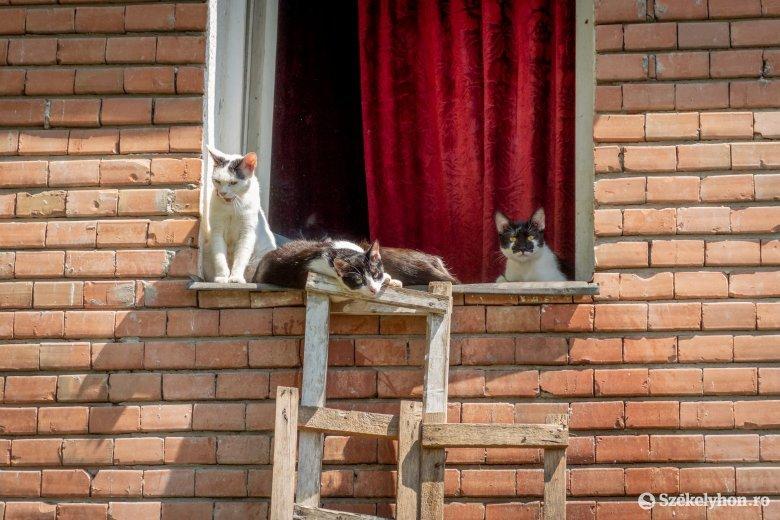 Víz nélkül, huszonöt macskával: egy csíkszeredai nő életmódja megkeseríti a körülötte lévők mindennapjait