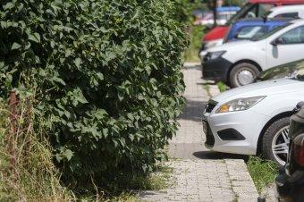 """Visszafoglalják a járdákat Csíkszeredában a """"zöldektől"""""""