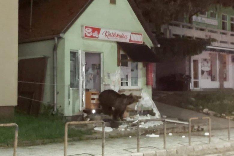 Panzióba és üzletbe törtek be a medvék Tusnádfürdőn