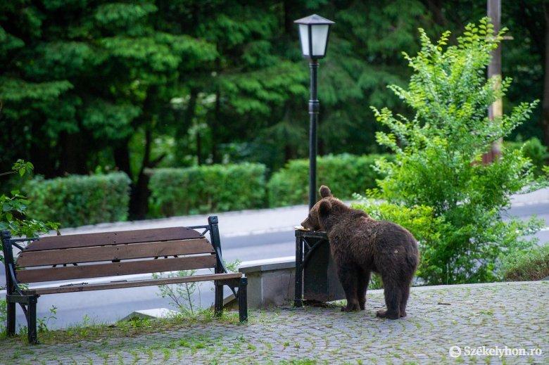 """Tizenötezer eurójába """"fájhat"""" a román államnak egy emberre támadó medve"""