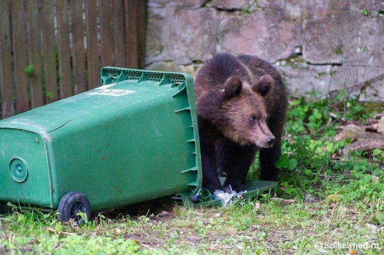 Saját udvarán támadt rá a medve a harmincéves nőre