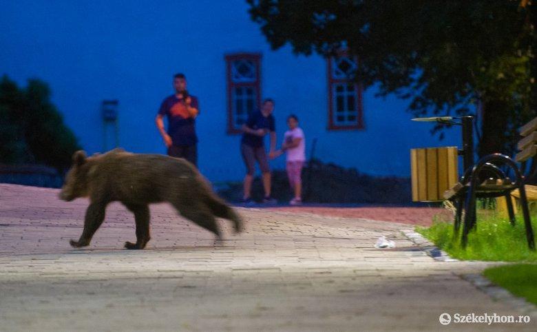 És mit mond a medvekutató?