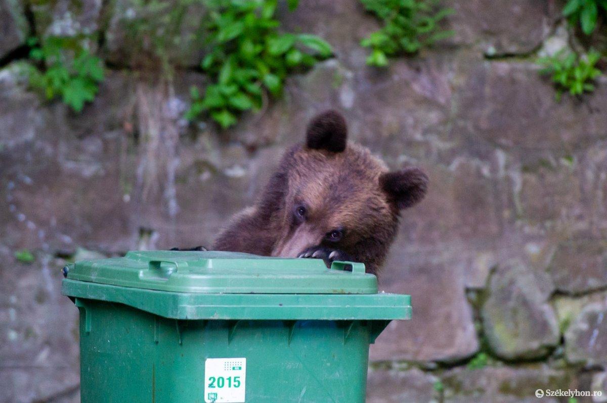 A hulladékon élők számára játék az egyszerű, üríthető kuka. •  Fotó: Beliczay László