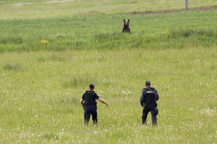 Már 24 óra alatt kilőhetik a veszélyes medvét: Tánczos Barna környezetvédelmi miniszter vadkérdésről, a régi autók kivezetéséről