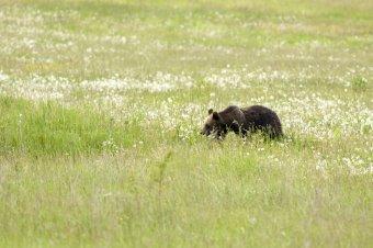 Tánczos: elkészítették az egy személy halálát okozó medve kilövésének engedélyeztetéséhez szükséges dokumentációt