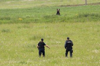Véletlenül bezárta a csűrbe az udvarára tévedt medvét