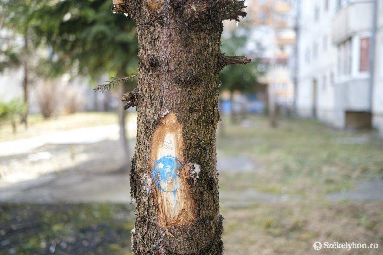 Megosztja a lakókat a felújítás érdekében tervezett fakivágás