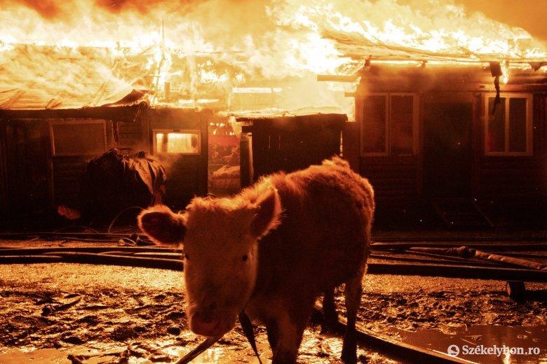 FRISSÍTVE – Húsz ház égett le a csíksomlyói cigánytelepen, egy túlhevült kályhacső okozhatta a tűzvészt