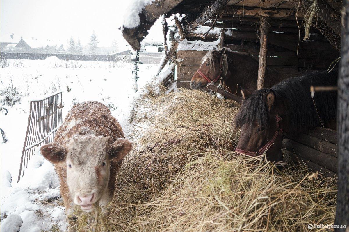 https://media.szekelyhon.ro/pictures/csik/aktualis/2021/12_januar/o_somlyo-utca-33-januar-11-vn-021.jpg