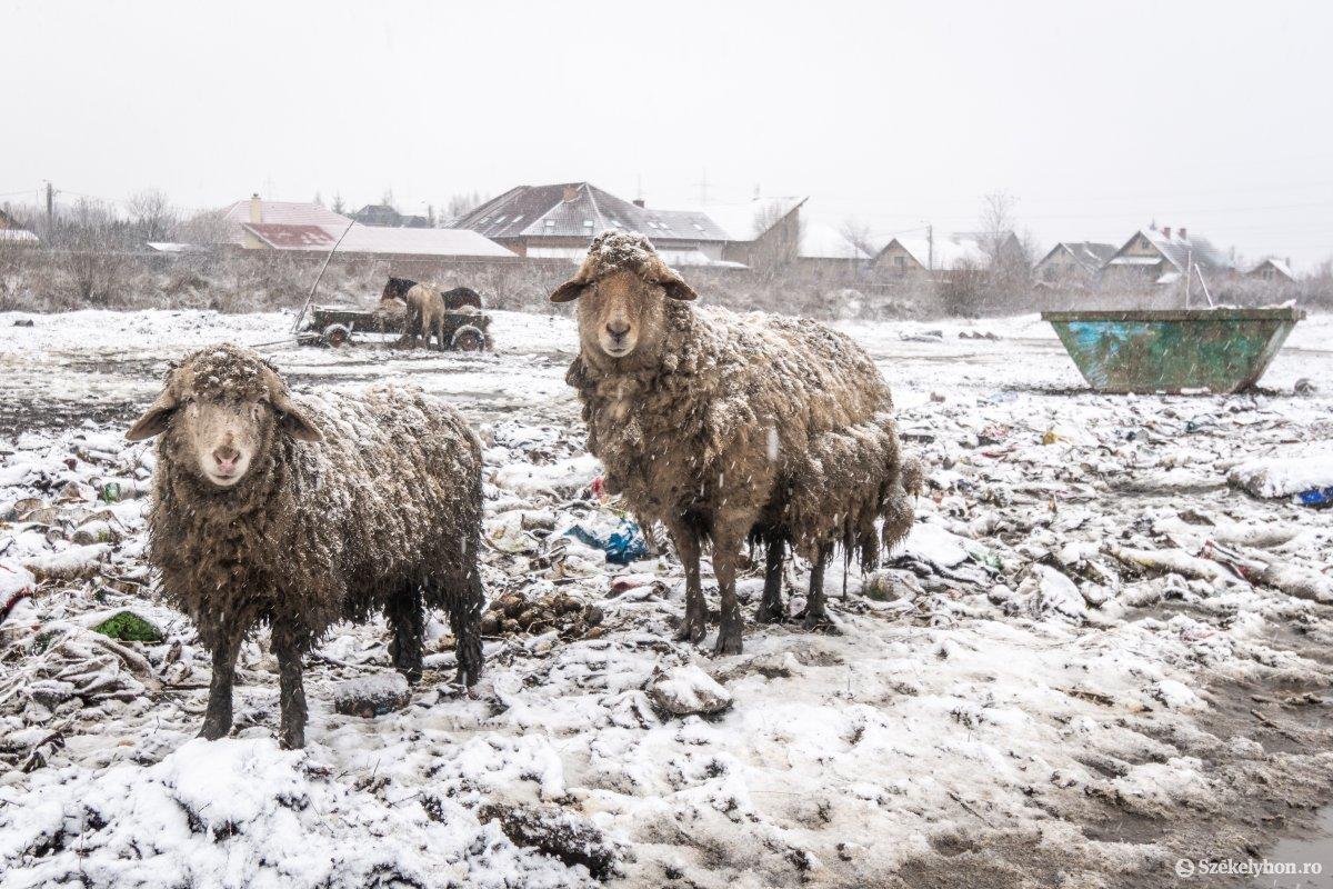 https://media.szekelyhon.ro/pictures/csik/aktualis/2021/12_januar/o_somlyoi-tuzvesz-utan-pnt-20.jpg