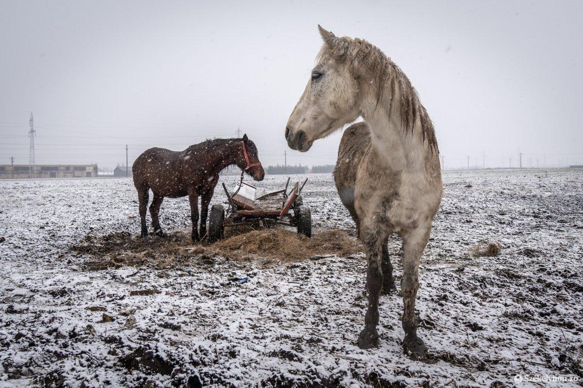 https://media.szekelyhon.ro/pictures/csik/aktualis/2021/12_januar/o_somlyoi-tuzvesz-utan-pnt-21.jpg
