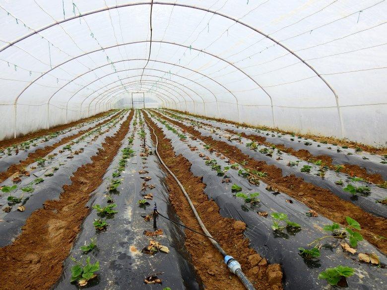 Szövetkezeti értékesítést szorgalmazó falugazdász