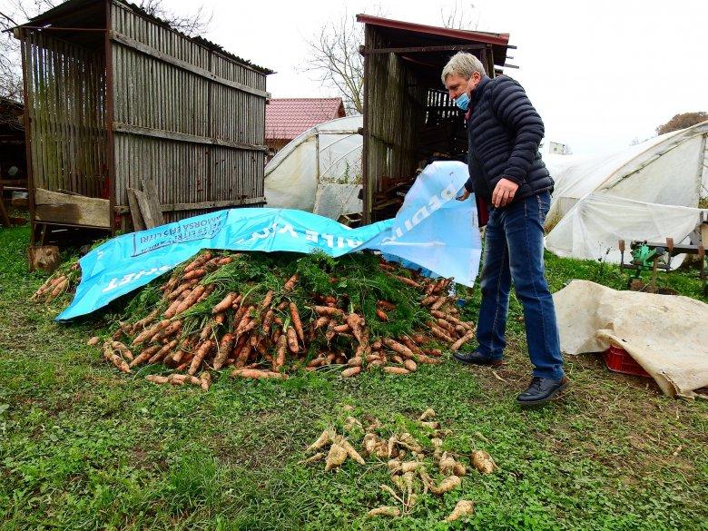 Szatmári termék széles választékban – földieper mellett mindenféle zöldséget megtermelnek Mikolán